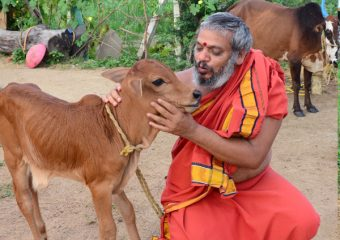 Cow protections with our swamiji